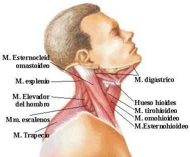Cuanto durar el tratamiento de la crisis de la columna vertebral