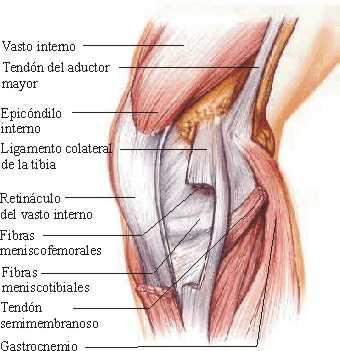 Interna - Dolor en la parte interior de la rodilla ...