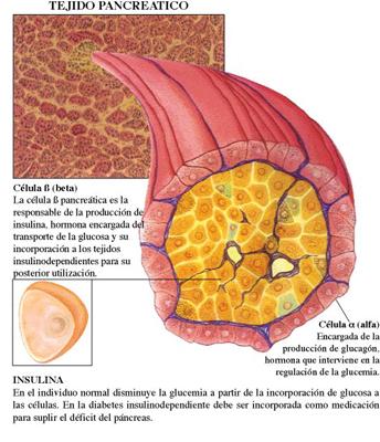 phd thesis diabetes